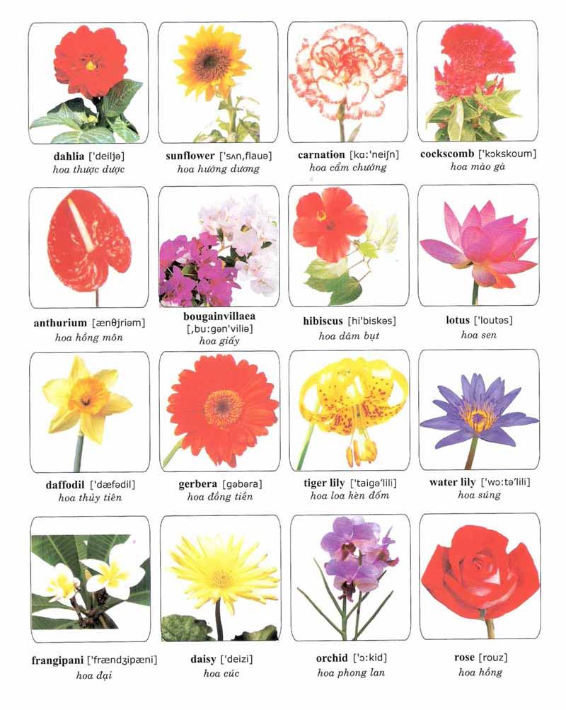 Từ vựng về các loài hoa